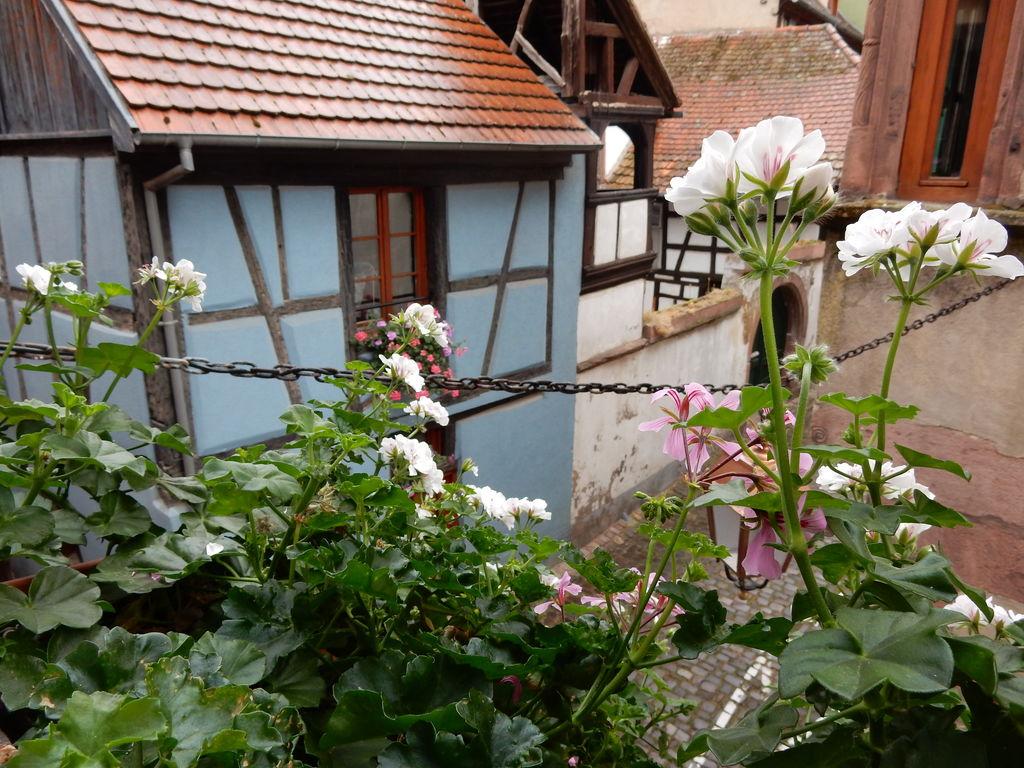 Holiday apartment Historisches Appartement in Riquewihr nahe dem Wald (302845), Riquewihr, Haut-Rhin, Alsace, France, picture 8
