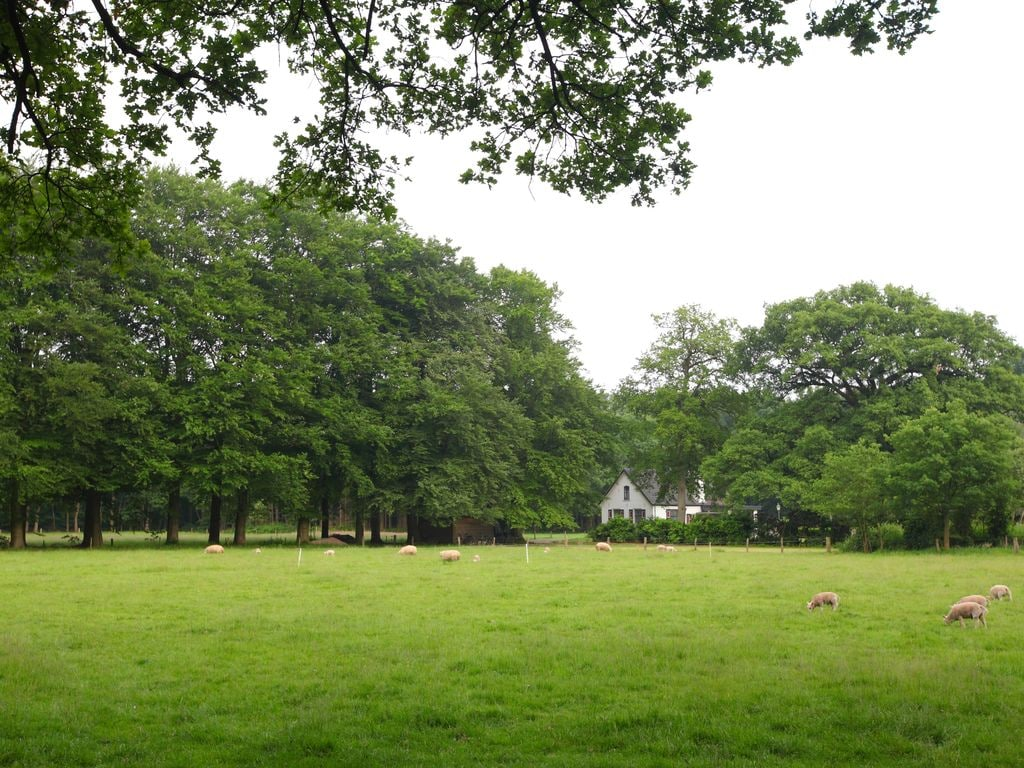 Ferienhaus Möbliertes Chalet mit Kombi-Mikrowelle in der Veluwe (321214), Epe, Veluwe, Gelderland, Niederlande, Bild 20