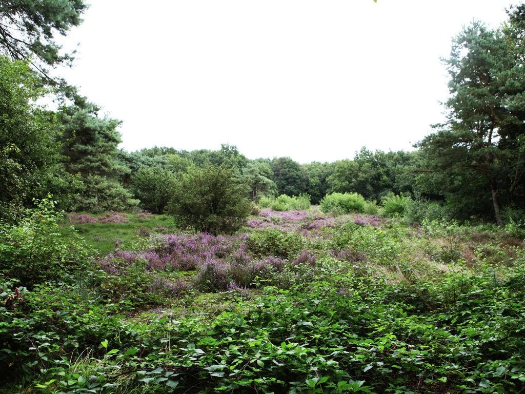 Ferienhaus Gemütliches Ferienhaus am Wald in Zuidwolde (364483), Zuidwolde DR, , Drenthe, Niederlande, Bild 27