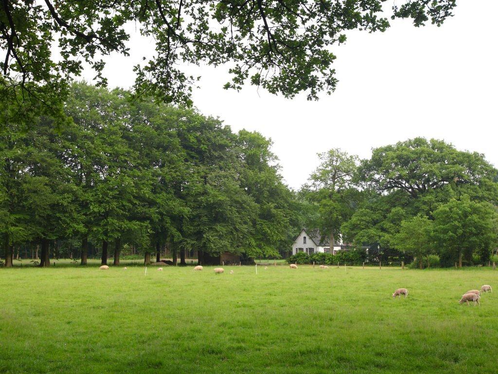 Ferienhaus Bospark de Schaapskooi 5 (323558), Wissel, Veluwe, Gelderland, Niederlande, Bild 22