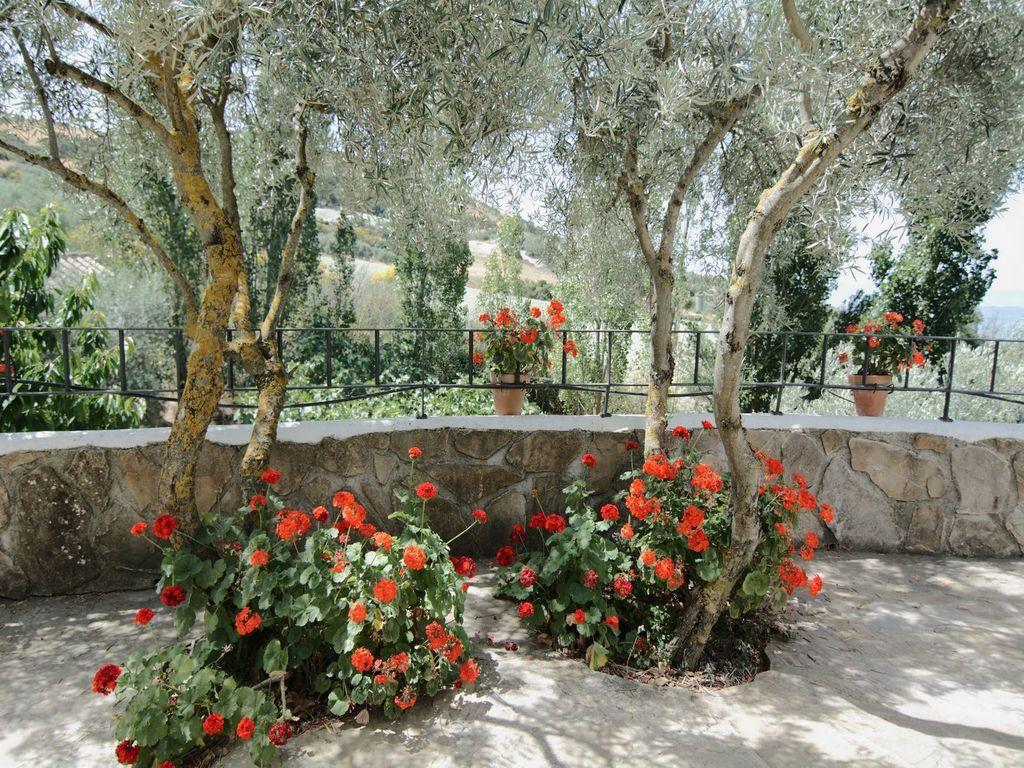 Maison de vacances Cortijo Los Olivos (89953), Nogales, Malaga, Andalousie, Espagne, image 33