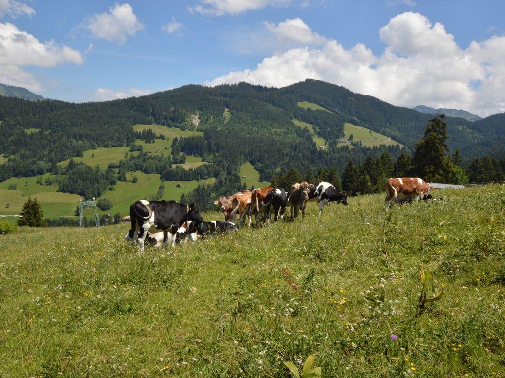 Ferienhaus Rundwieshütte (315566), Sulz-Röthis, Bodensee-Vorarlberg, Vorarlberg, Österreich, Bild 16