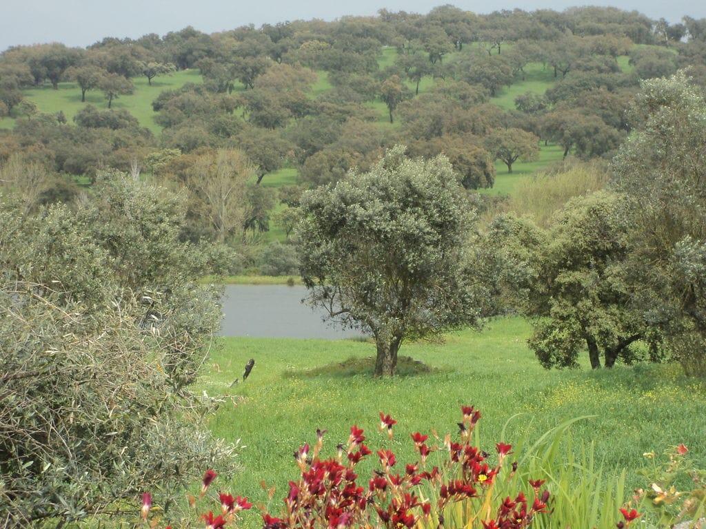 Ferienhaus Idyll. Bauernhof mit Außenpool in Montemor-o-Novo Alentejo (101241), Montemor-o-Novo, , Alentejo, Portugal, Bild 8