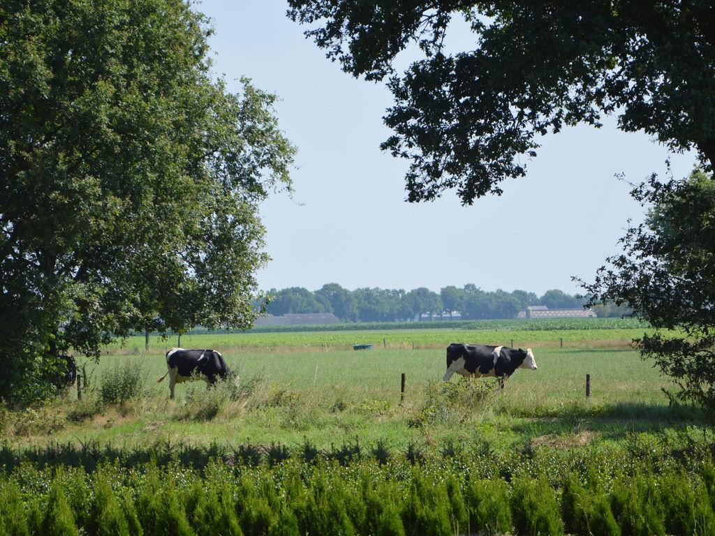 Ferienhaus 't Krampven (101526), Diessen (NL), , Nordbrabant, Niederlande, Bild 33