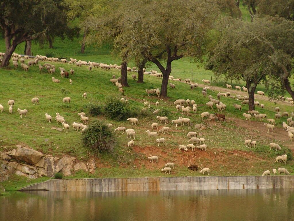 Ferienhaus Gemütlicher Bauernhof mit Swimmingpool in Montemor-o-Novo (178205), Montemor-o-Novo, , Alentejo, Portugal, Bild 26