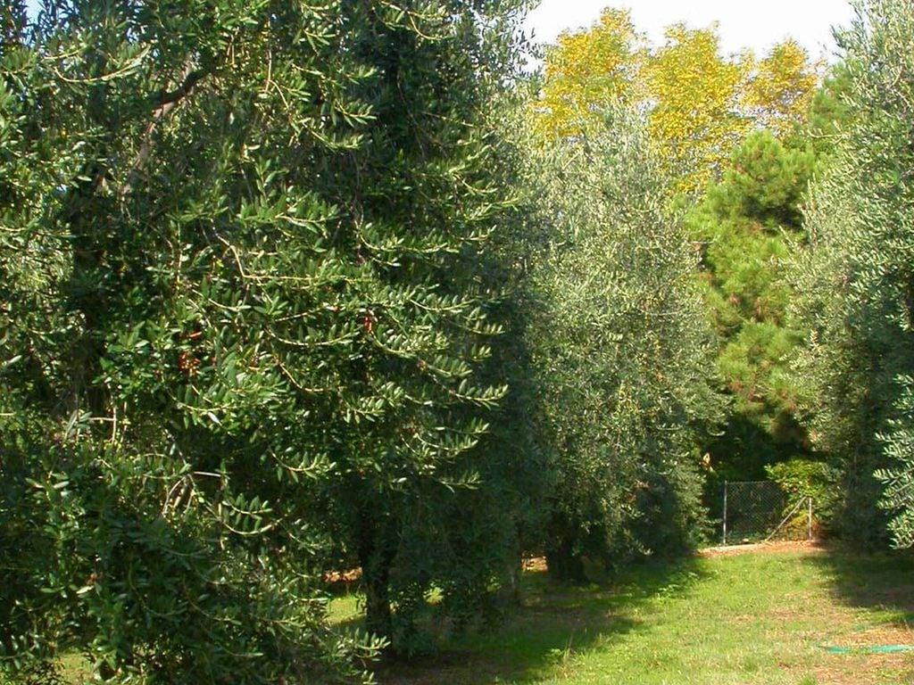 Ferienhaus Casa Rondò (119865), Montevettolini, Pistoia, Toskana, Italien, Bild 22