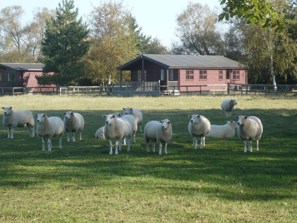 Maison de vacances Five Waterings (122133), Brookland, Kent, Angleterre, Royaume-Uni, image 2