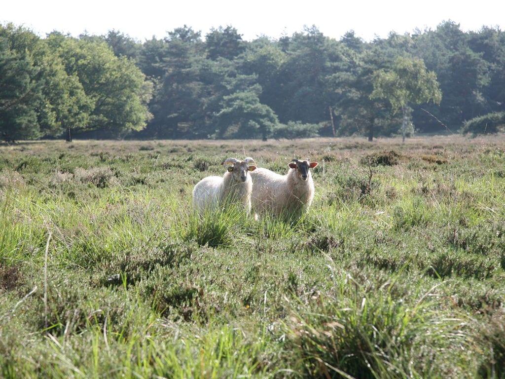 Ferienhaus Freist. Ferienhaus mit 2 Badezimmern, im Naturschutzgebiet (257023), Laaghalen, , Drenthe, Niederlande, Bild 29
