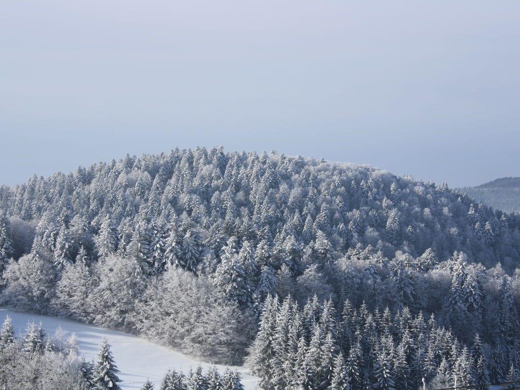 Ferienwohnung Herrischried (255394), Herrischried, Schwarzwald, Baden-Württemberg, Deutschland, Bild 30