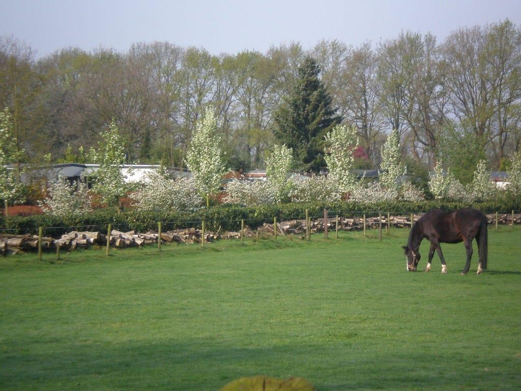 Ferienhaus Vakantiepark de Tabaksschuur 1 (257464), Elst UT, , Utrecht, Niederlande, Bild 22