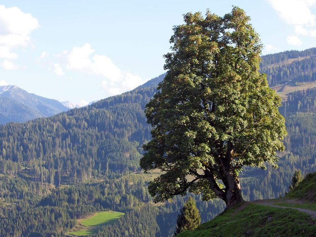 Appartement de vacances Bucher (253599), Wagrain, Pongau, Salzbourg, Autriche, image 21