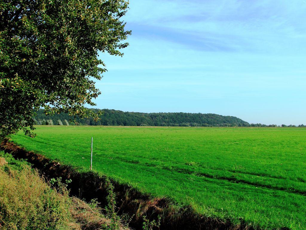 Ferienhaus Freistehendes Ferienhaus mit schönem Garten in der Betuwe (214467), Kesteren, Rivierenland, Gelderland, Niederlande, Bild 8