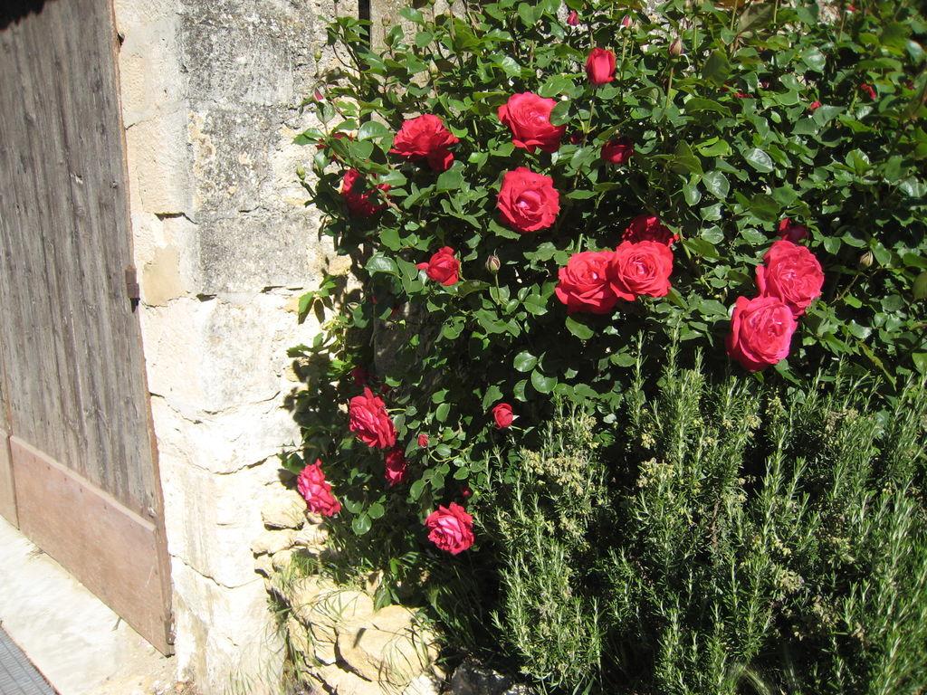 Holiday house Les Sources (224953), Oppède, Vaucluse, Provence - Alps - Côte d'Azur, France, picture 5