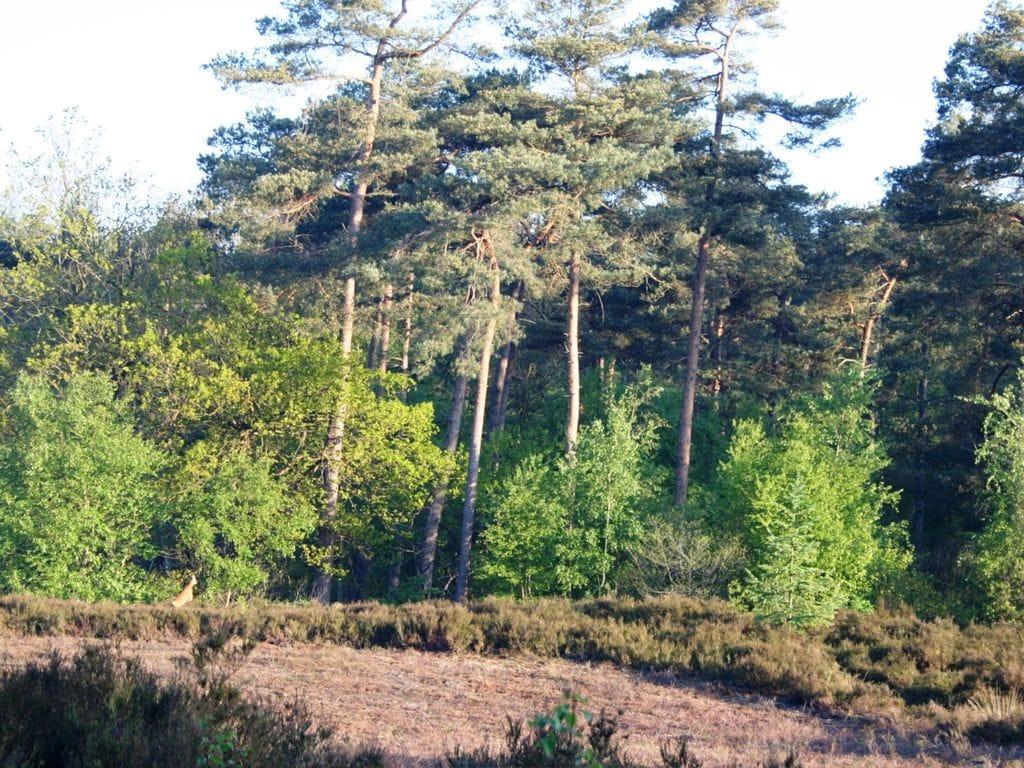 Ferienhaus Schönes Haus mit viel Privatsphäre, umgeben von Wäldern. (226640), De Bult, Kop van Overijssel, Overijssel, Niederlande, Bild 23