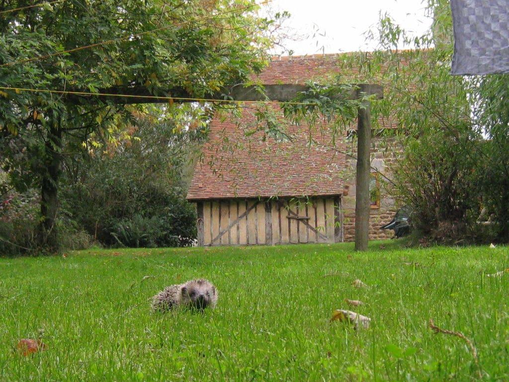 Ferienhaus Gemütliches Ferienhaus in Ceaucé (257219), Ceaucé, Orne, Normandie, Frankreich, Bild 18