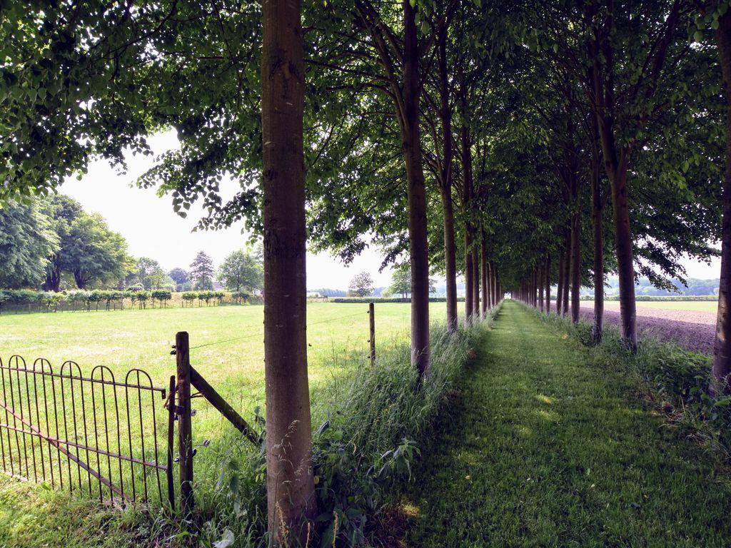 Ferienhaus Authentisches Landhaus in Deil am See (259677), Deil, Rivierenland, Gelderland, Niederlande, Bild 30