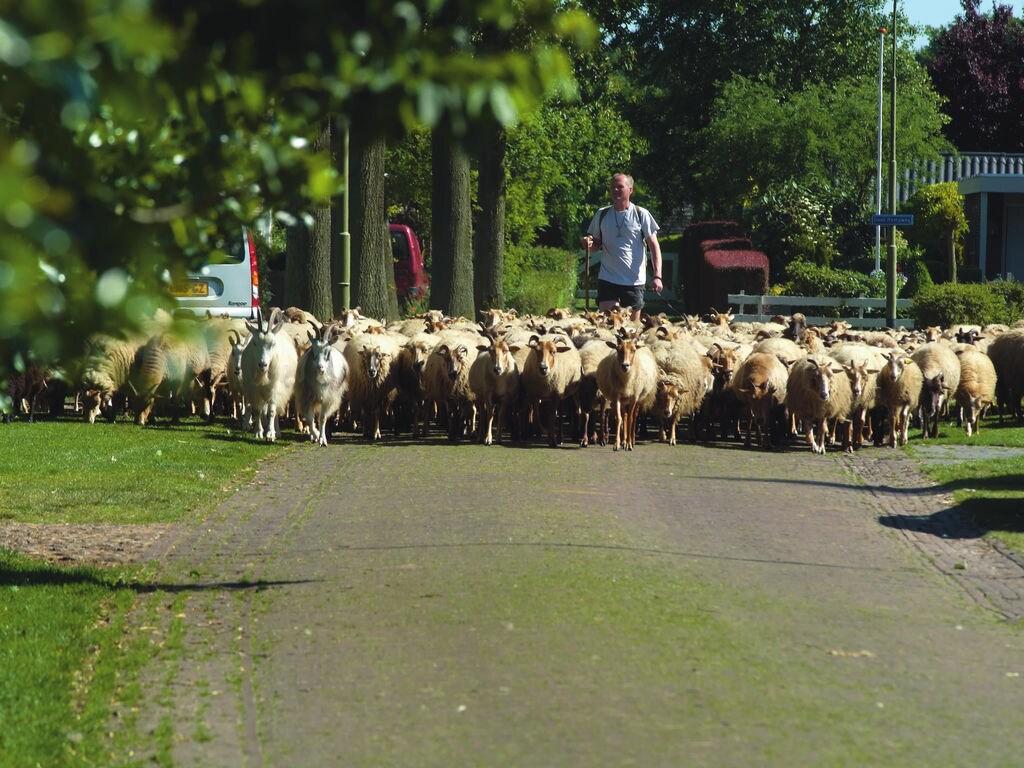 Ferienhaus Bospark Lunsbergen 6 (264791), Borger, , Drenthe, Niederlande, Bild 14