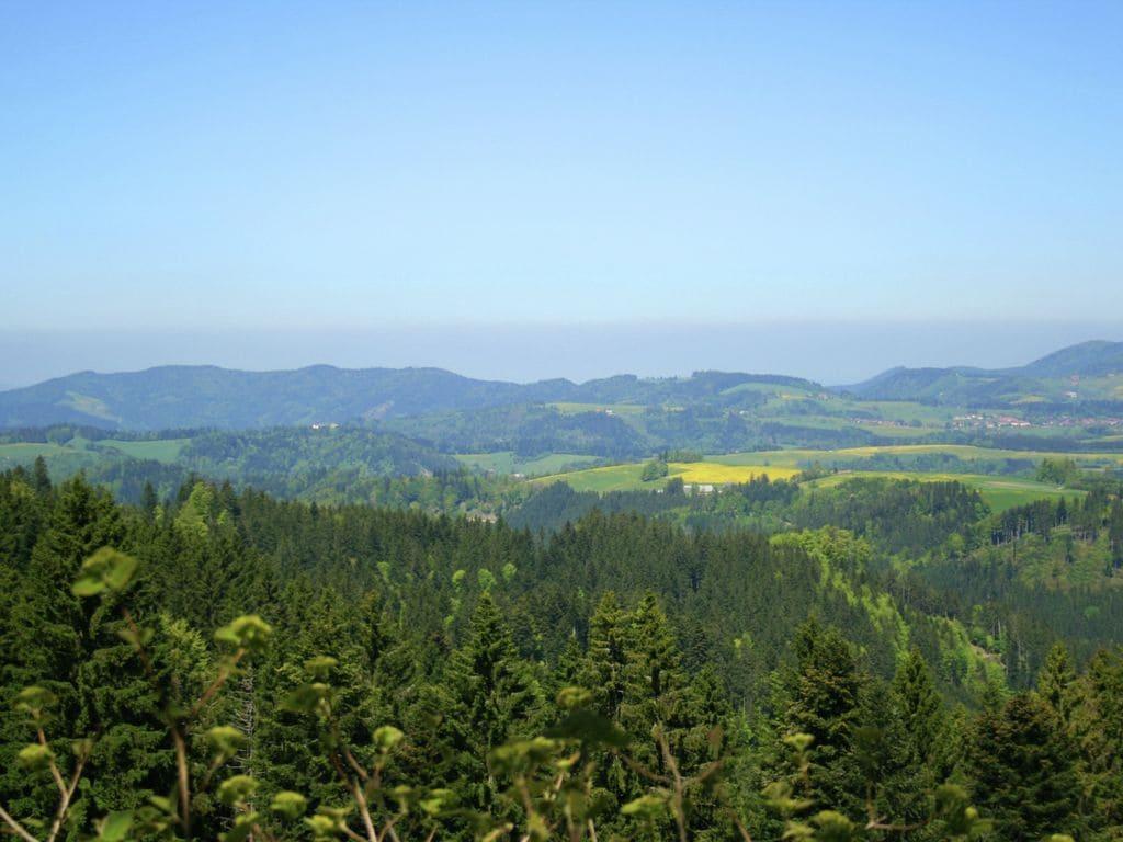 Ferienwohnung Gemütliches Apartment in der Nähe des Skigebiets in Urberg (295058), Dachsberg, Schwarzwald, Baden-Württemberg, Deutschland, Bild 17