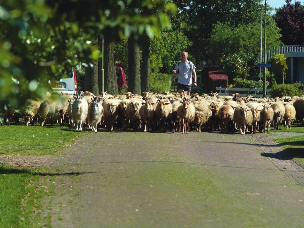 Ferienhaus Gemütliches Chalet mit Geschirrsp. neben Naturschutzgebiet (321215), Borger, , Drenthe, Niederlande, Bild 17