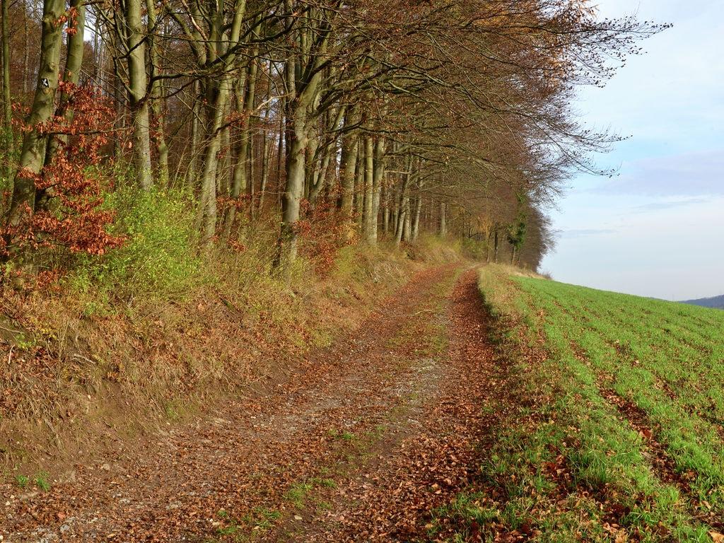 Ferienwohnung Ruhige Ferienwohnung in Löwensen Niedersachsen mit Terrasse (310972), Bad Pyrmont, Weserbergland (Niedersachsen), Niedersachsen, Deutschland, Bild 26