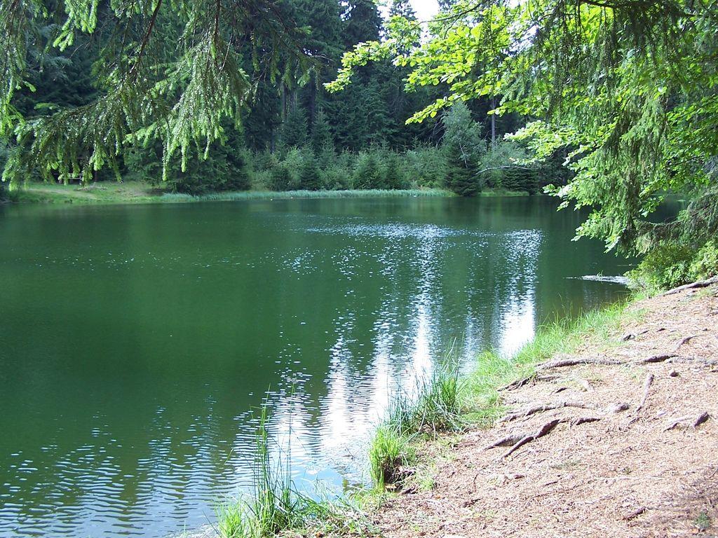 Ferienhaus Heritage Villa mit Heimkino, Sauna und großem Garten nahe Erzgebirge (316645), Treuen, Vogtland (Sachsen), Sachsen, Deutschland, Bild 28