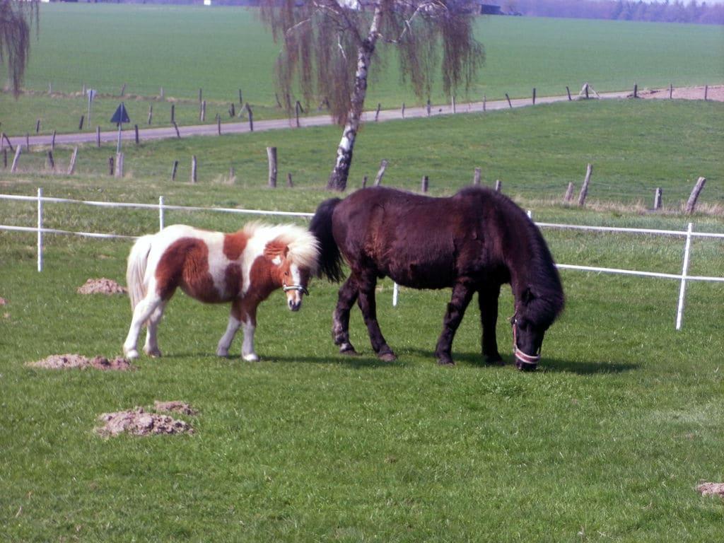 Ferienwohnung Authentischer Bauernhof in Friedrichsfeld Hessen mit Garten (317147), Trendelburg, Nordhessen, Hessen, Deutschland, Bild 22