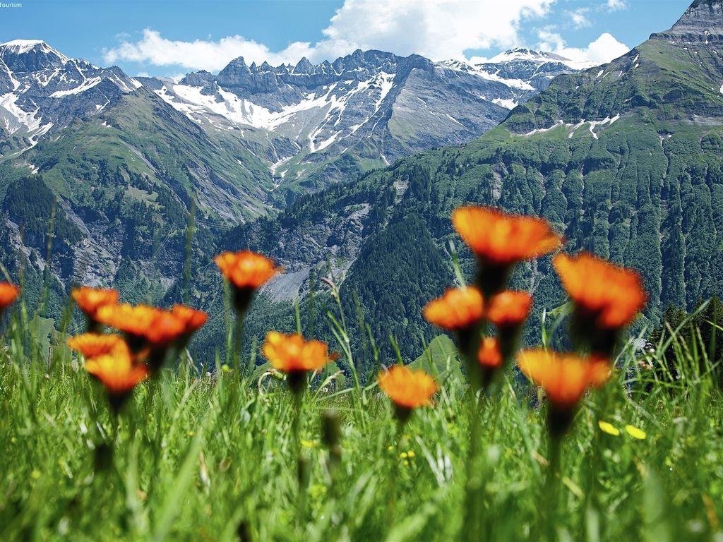 Ferienwohnung Ruhiger Bauernhof mit Parkplatz in Habkern (320599), Habkern, Thunersee - Brienzersee, Berner Oberland, Schweiz, Bild 24