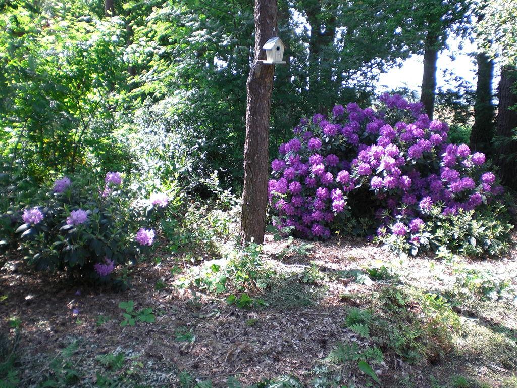 Ferienhaus Buitenplaats Berg en Bos 19 (336415), Lemele, Salland, Overijssel, Niederlande, Bild 25