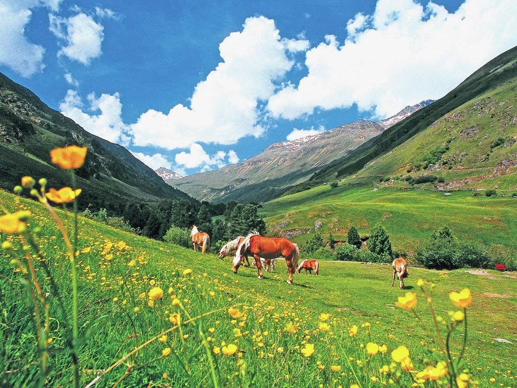 Appartement de vacances Gemütliche Ferienwohnung in Skigebietsnähe in Längenfeld (333310), Längenfeld, Ötztal, Tyrol, Autriche, image 19