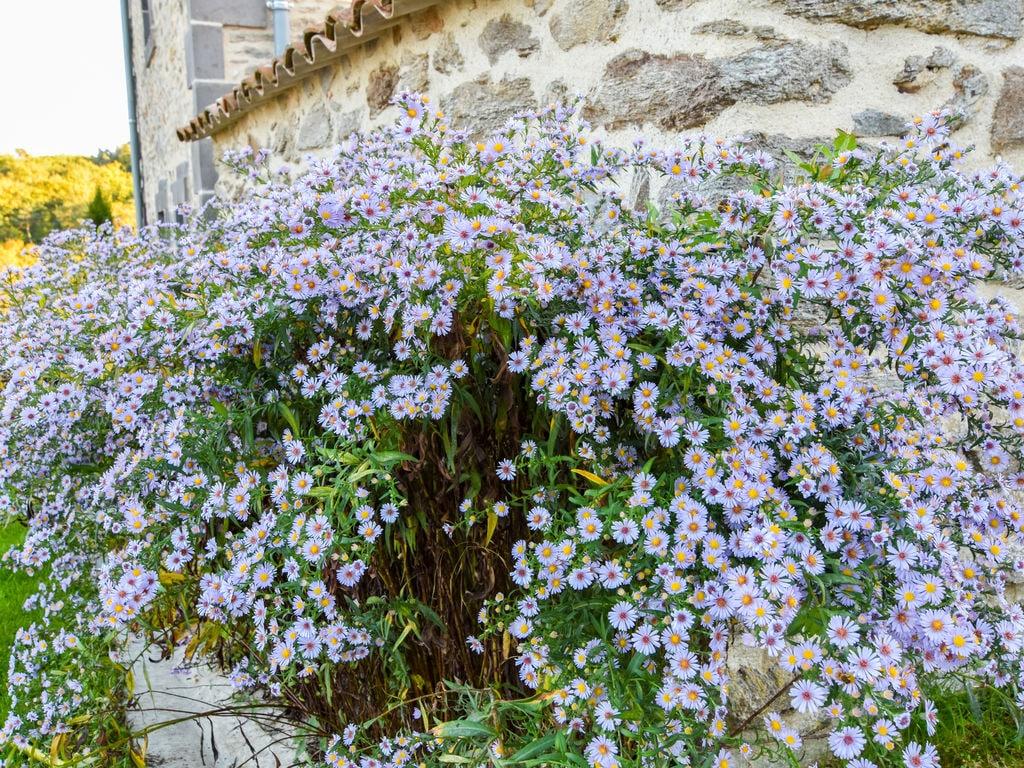 Ferienhaus Ruhiges Ferienhaus in Saint-Beauzire mit Garten (344463), Brioude, Haute-Loire, Auvergne, Frankreich, Bild 19