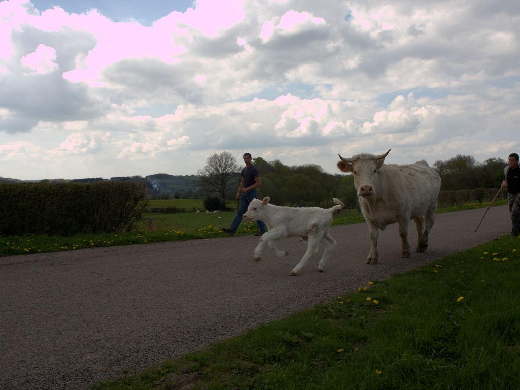 Ferienhaus Le Mont (814779), Onlay, Nièvre, Burgund, Frankreich, Bild 37