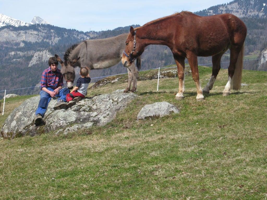 Ferienwohnung Brog (343339), Schattenhalb, Meiringen - Hasliberg, Berner Oberland, Schweiz, Bild 18