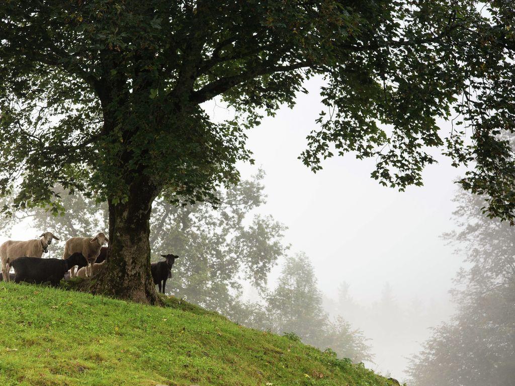 Ferienwohnung Brog (343339), Schattenhalb, Meiringen - Hasliberg, Berner Oberland, Schweiz, Bild 15
