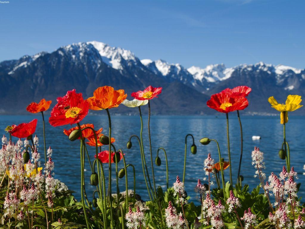 Ferienwohnung Großzügige Ferienwohnung mit Garten in Saas-Almagell (343174), Saas Almagell, Saastal, Wallis, Schweiz, Bild 24