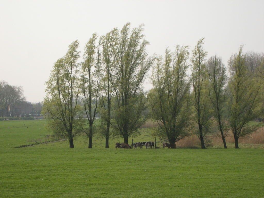 Ferienhaus Idyllisches Bauernhaus in Oosterwijk nahe dem Fluss (344675), Oosterwijk, , Südholland, Niederlande, Bild 33