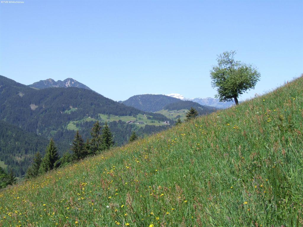 Appartement de vacances Niederau (360805), Wildschönau-Niederau, Hohe Salve, Tyrol, Autriche, image 23