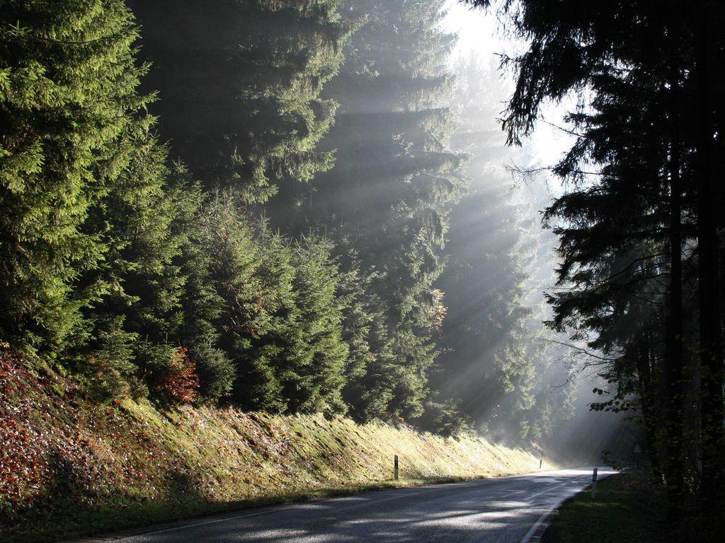 Ferienwohnung Im Frankenwald (365474), Weißenbrunn, Frankenwald, Bayern, Deutschland, Bild 28