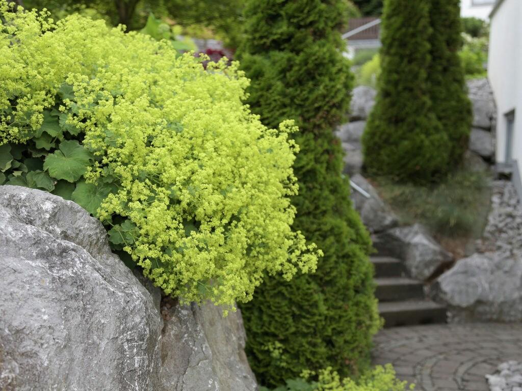 Ferienwohnung Helle Wohnung in Düdinghausen Sauerland mit schönem Garten (376705), Medebach, Sauerland, Nordrhein-Westfalen, Deutschland, Bild 29