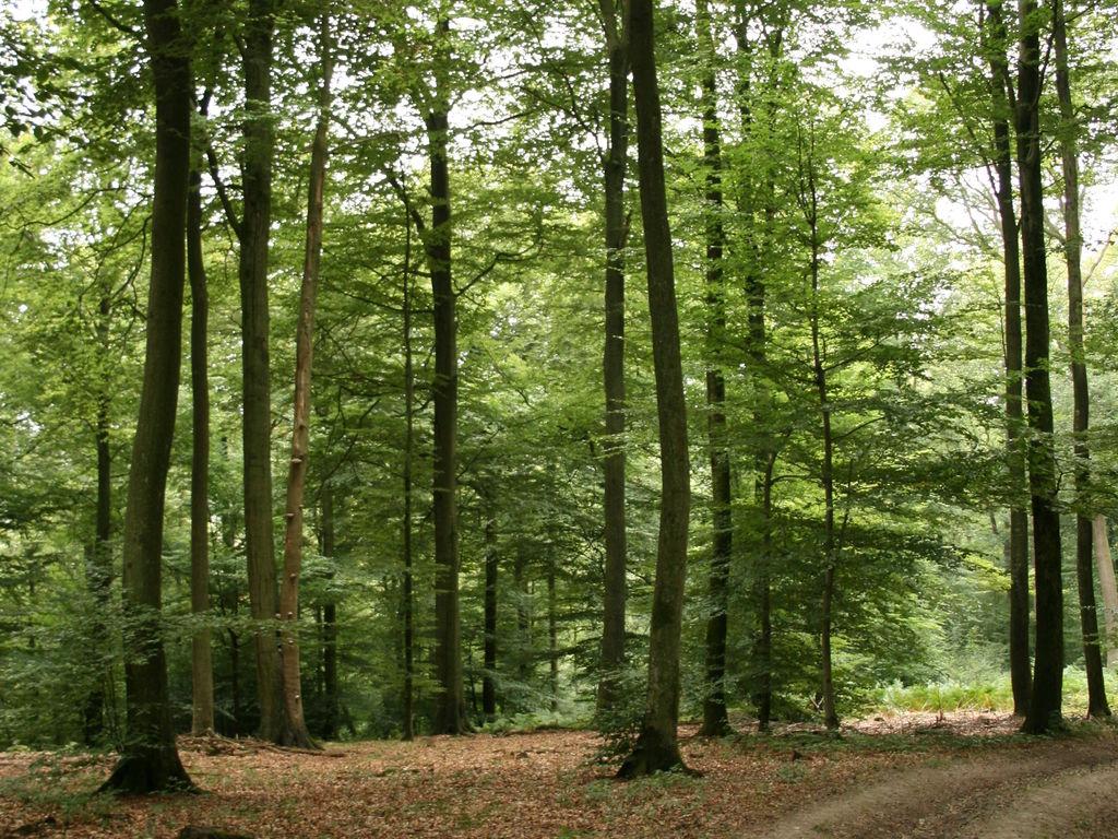 Ferienwohnung Les Chenets (377700), Gros-Fays, Namur, Wallonien, Belgien, Bild 30