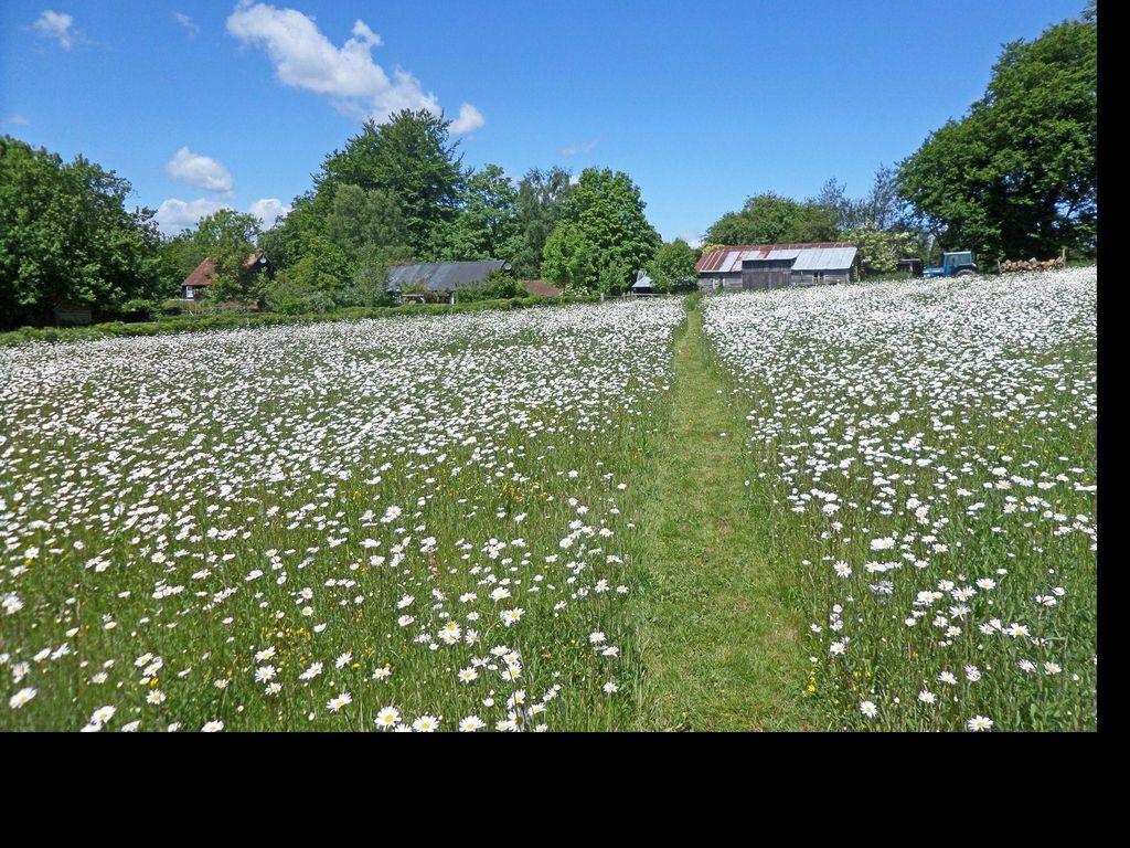 Ferienhaus The Bothy (398214), Biddenden, Kent, England, Grossbritannien, Bild 5