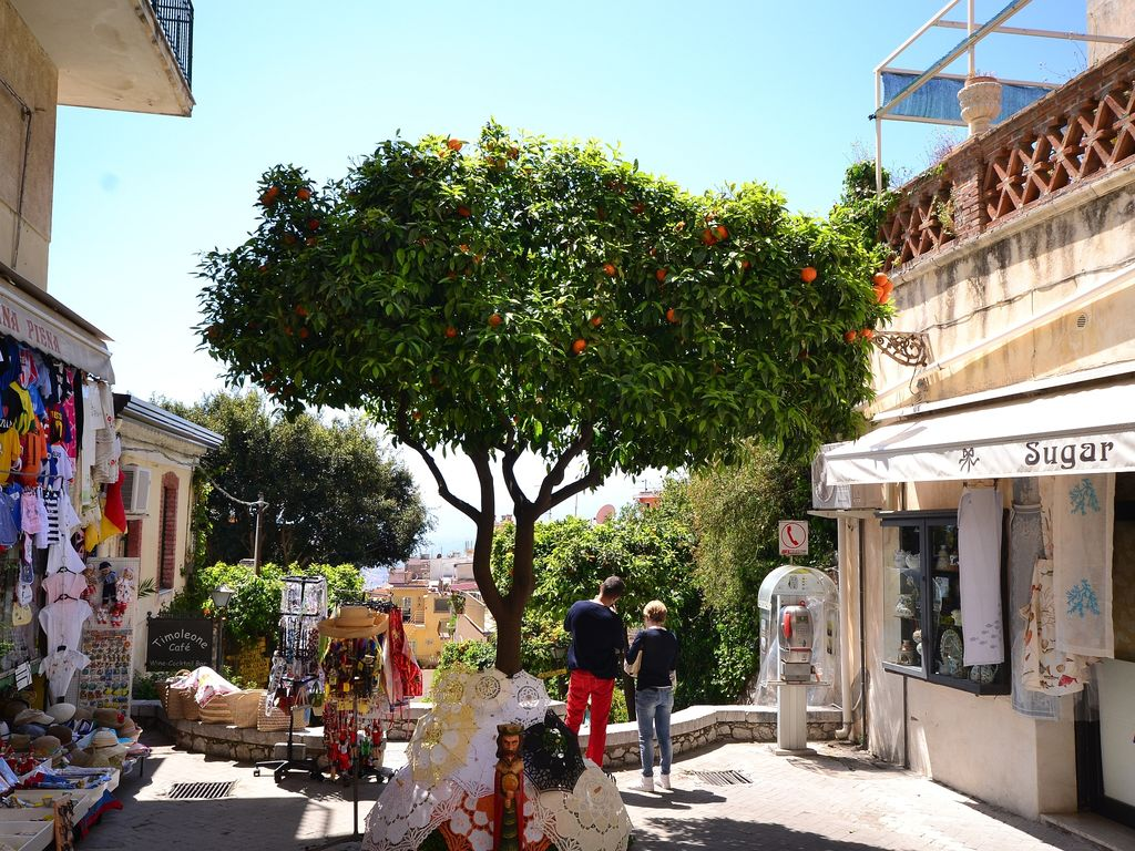 Holiday house Casa Pizziddu (412183), Acireale, Catania, Sicily, Italy, picture 31