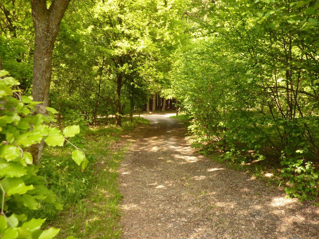 Ferienhaus Gemütliches Chalet in Trois Ponts mit nahegelegenem Wald (425682), Trois-Ponts, Lüttich, Wallonien, Belgien, Bild 35