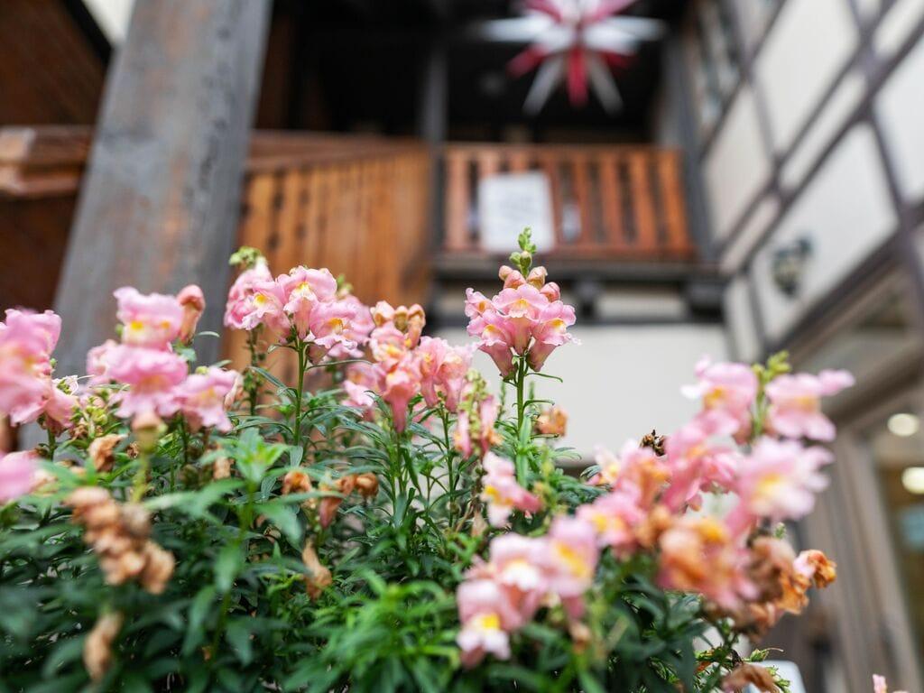 Ferienwohnung Attraktives Apartment in Quedlinburg mit Innenhof (426222), Quedlinburg, Harz (Sachsen-Anhalt), Sachsen-Anhalt, Deutschland, Bild 28