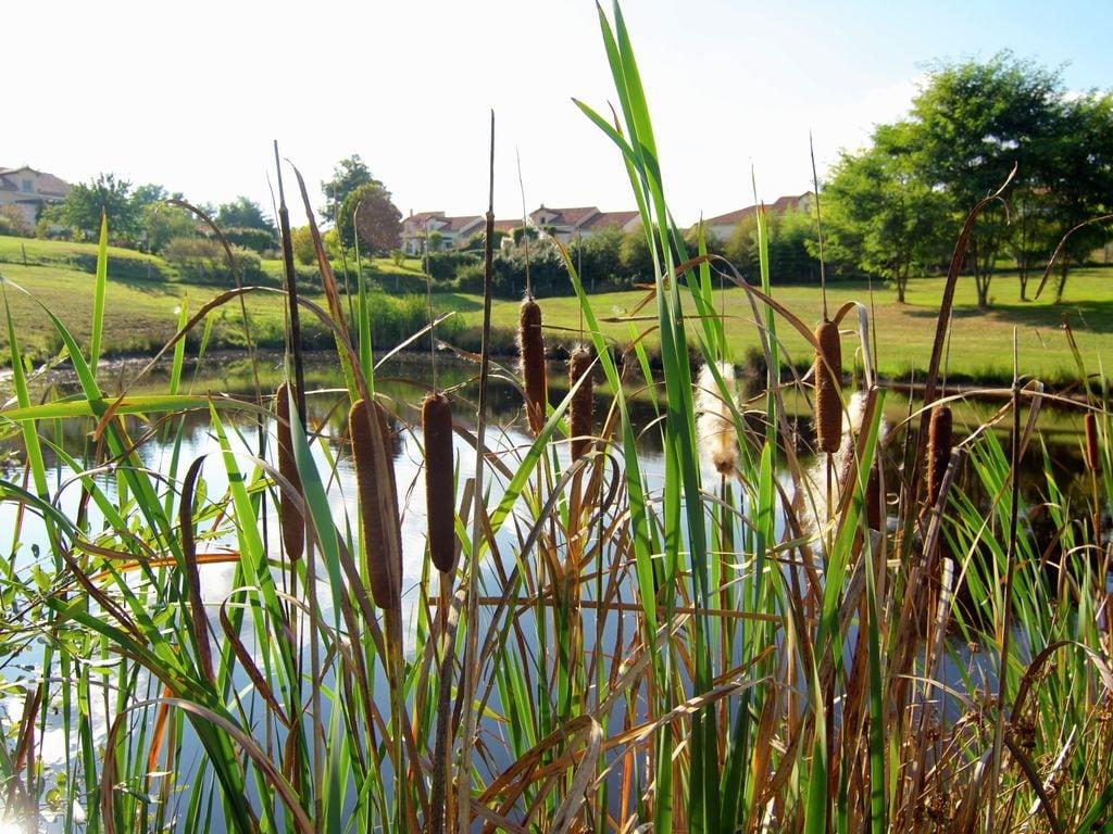 Ferienhaus Sehr schönes Ferienhaus mit Studio in einer Domäne mit beheiztem Pool. (465008), Cherves Châtelars, Charente, Poitou-Charentes, Frankreich, Bild 32