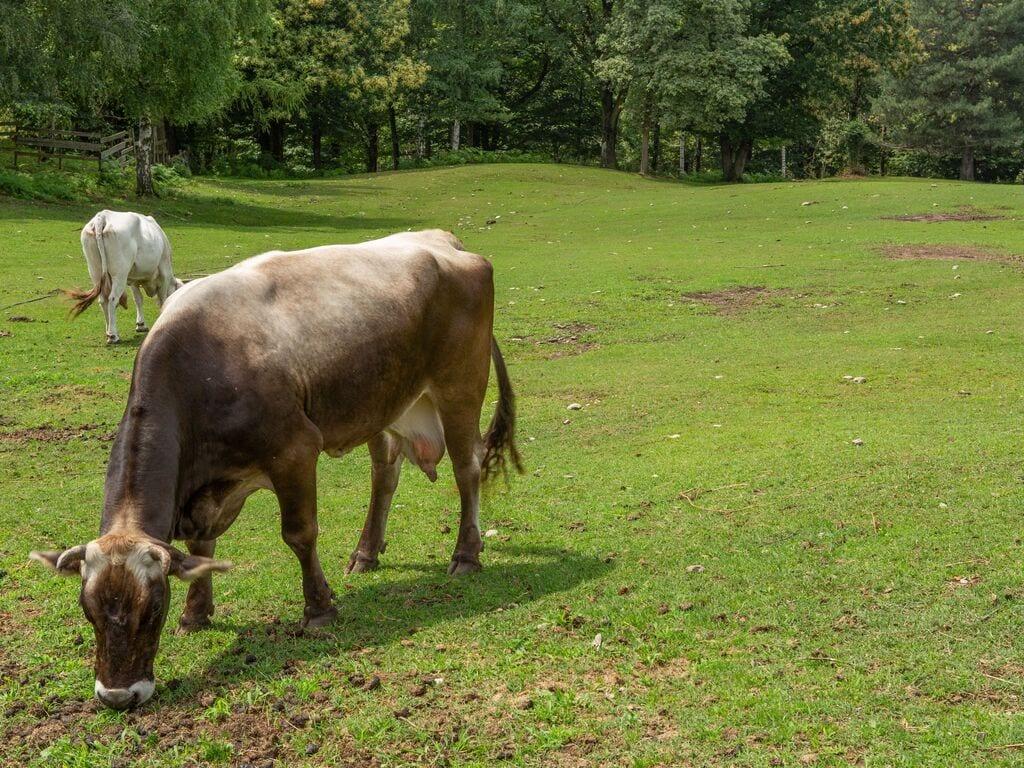 Ferienhaus Geräumiger Bauernhof in Verbania mit Garten (456979), Pallanza, Lago Maggiore (IT), Piemont, Italien, Bild 26