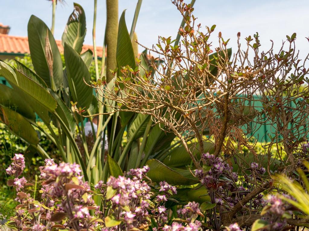 Ferienhaus Freistehendes Ferienhaus mit eigener Terrasse in Arcozelo (480377), Ponte de Lima, , Nord-Portugal, Portugal, Bild 14