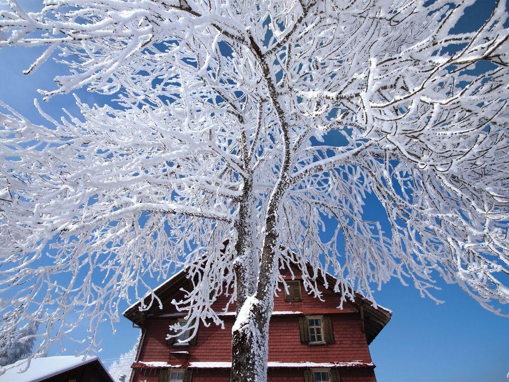 Ferienwohnung Moderne Ferienwohnung in Waldnähe in Mastrils (479557), Mastrils, Chur, Graubünden, Schweiz, Bild 16