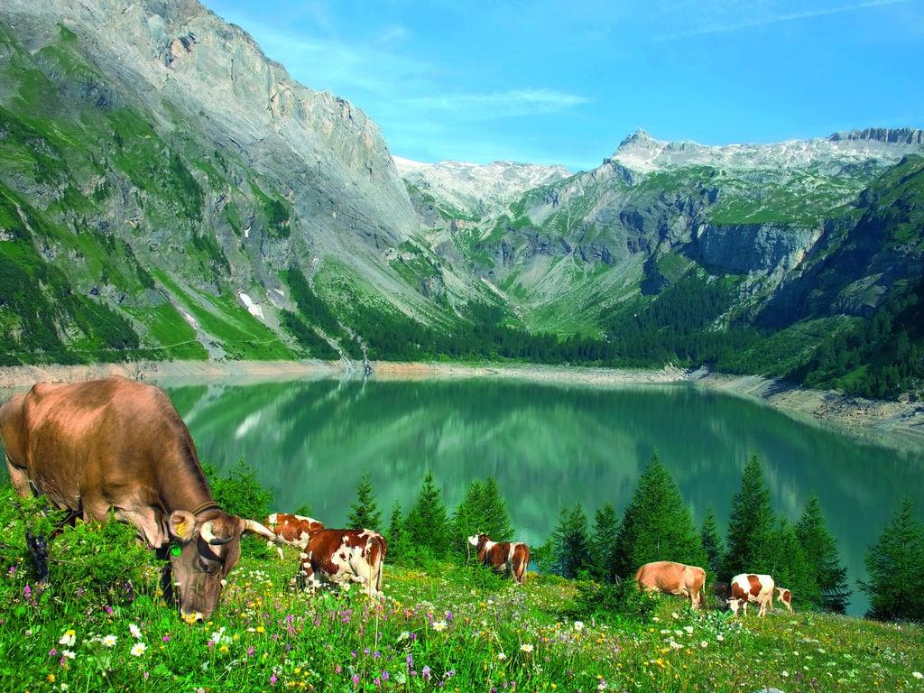Ferienwohnung Bieler (482924), Termen, Brig - Simplon, Wallis, Schweiz, Bild 19