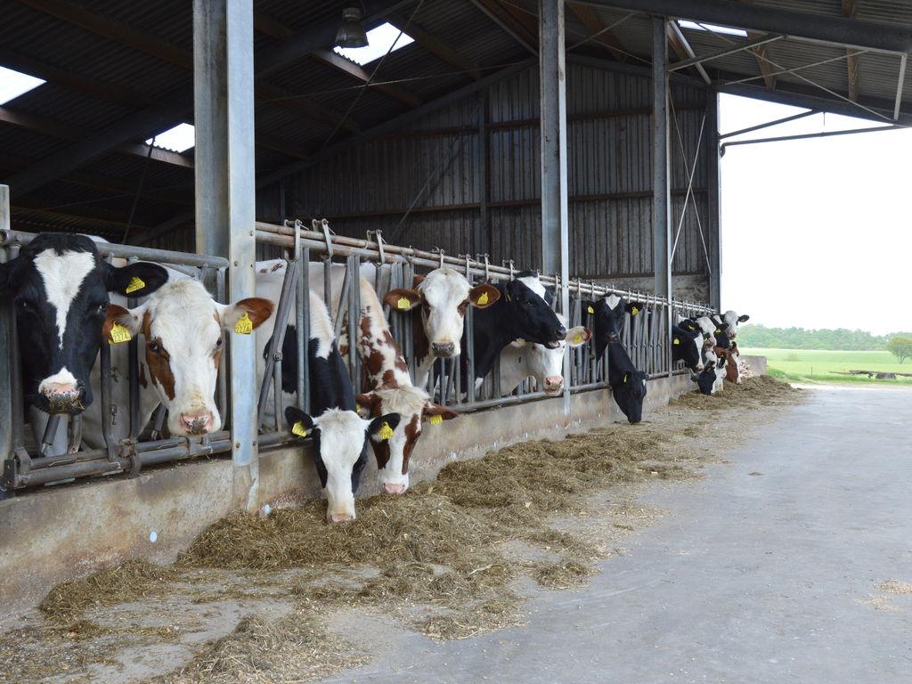 Ferienwohnung Ruhiges Bauernhaus in Groesbeek mit Terrasse (488597), Groesbeek, Arnheim-Nimwegen, Gelderland, Niederlande, Bild 23