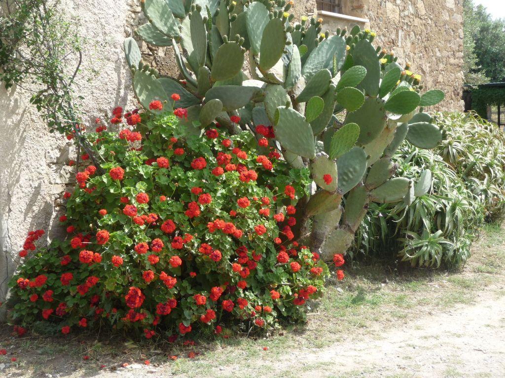 Holiday house Lavanda (494246), Collesano, Palermo, Sicily, Italy, picture 35